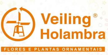 Veiling Holambra Flores e Plantas Ornamentais maior
